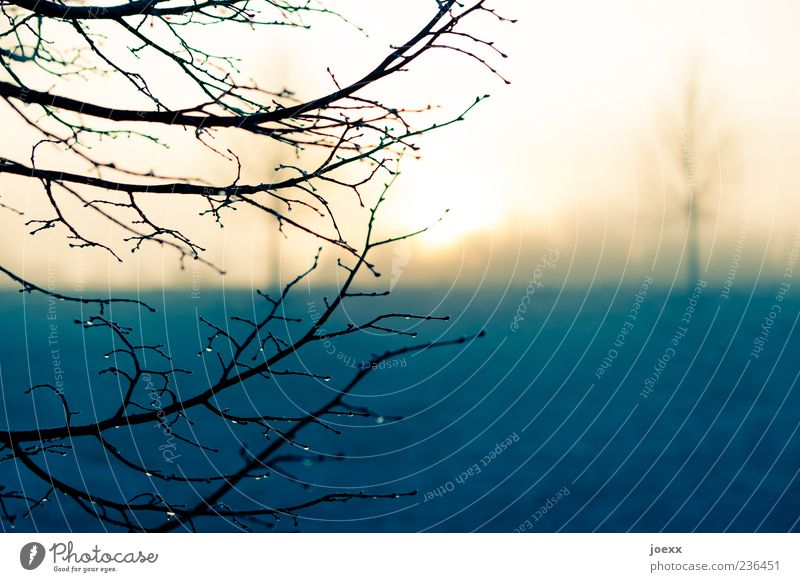Im Frühtau Natur Landschaft Sonne Sonnenaufgang Sonnenuntergang Sonnenlicht Herbst Winter Baum Park kalt gelb Tau Ast Farbfoto Gedeckte Farben Außenaufnahme