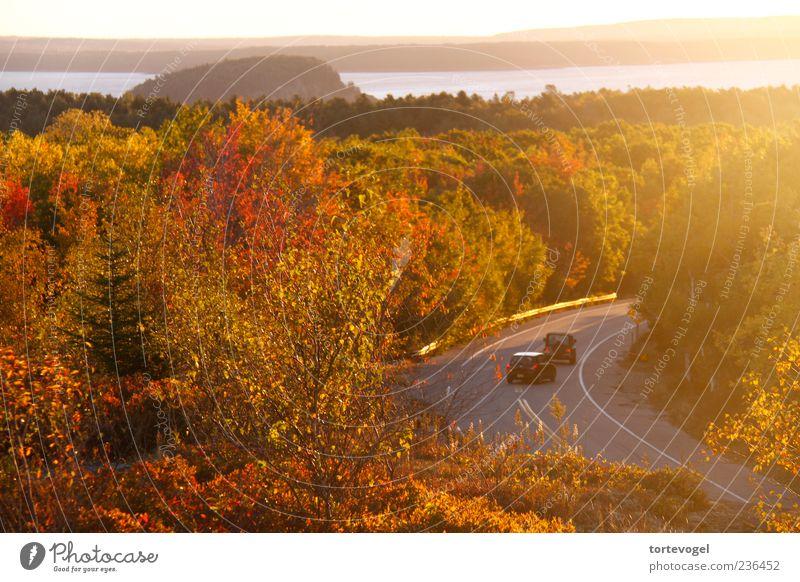 Indian Summer @ Acadia NP Natur Baum Ferien & Urlaub & Reisen rot Sonne Meer Sommer Wald Ferne Erholung Landschaft Straße Herbst Wärme Freiheit Küste