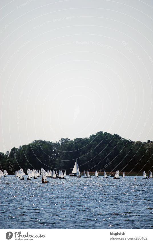 Scharmützelseesegler II Wassersport Segeln Segelboot Himmel See blau weiß Freude Sport Ferne Farbfoto Außenaufnahme Menschenleer Textfreiraum oben Tag