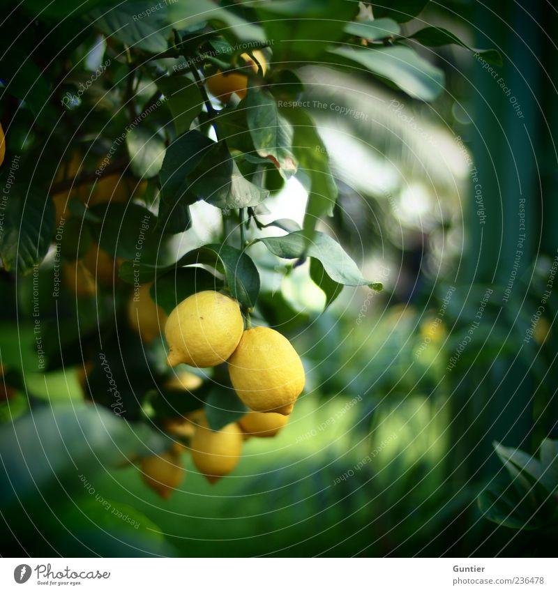 sauer macht lustig,... Natur weiß Baum grün Pflanze Blatt schwarz Ernährung gelb Gefühle Park Lebensmittel Frucht frisch Lebensfreude