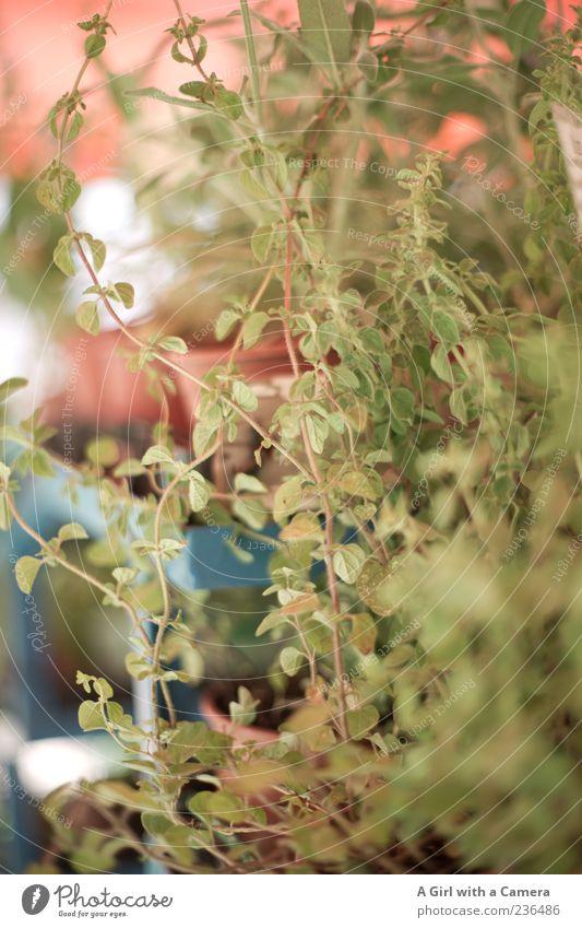 dreams on sale Natur grün Pflanze natürlich Sträucher