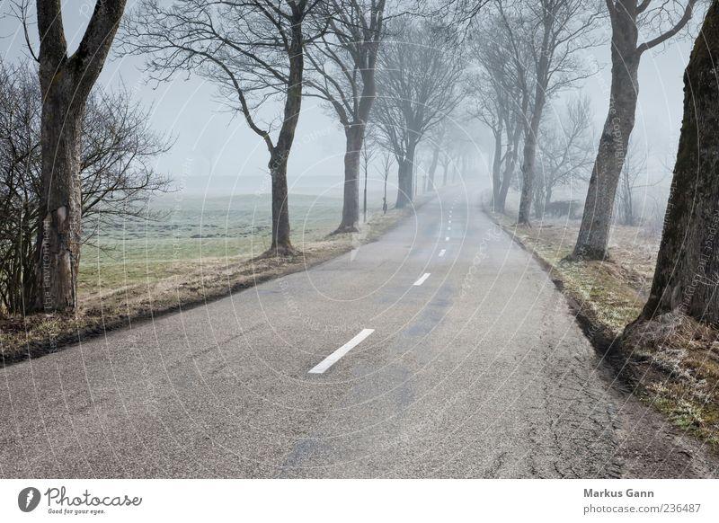 Straße im Morgennebel Natur Nebel Allee Baum Wege & Pfade Wetter Landstraße Farbfoto Gedeckte Farben Außenaufnahme Textfreiraum unten Morgendämmerung Landschaft