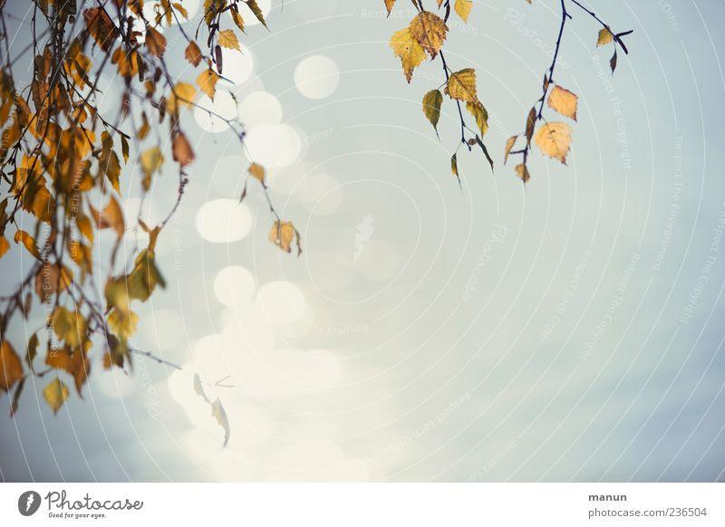 Foto mit Birke und Wasser Natur schön Baum Blatt Herbst Reflexion & Spiegelung Zweige u. Äste Außenaufnahme Wasserspiegelung herunterhängend