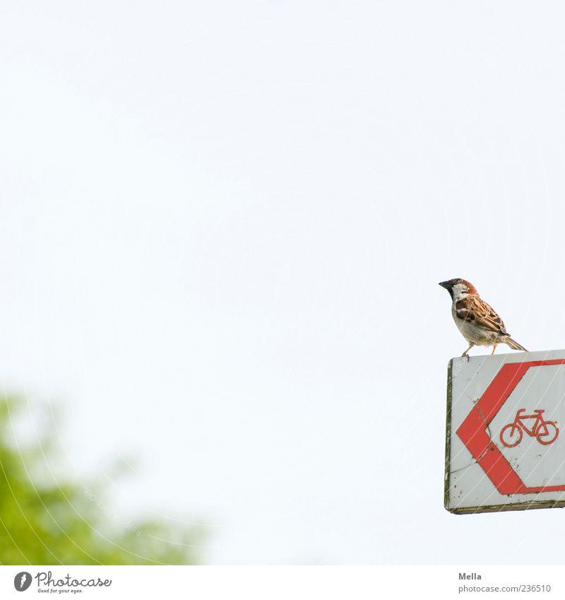Vogel sucht Fahrrad oder: Quo Vadis, Spatz? Himmel rot Tier klein hell sitzen Schilder & Markierungen Hinweisschild niedlich Zeichen Pfeil links Wegweiser