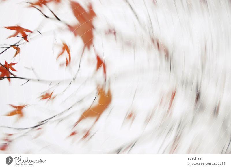 draussen stürmt es .. Umwelt Natur Pflanze Himmel Herbst Wind Sturm Baum drehen rot Blatt rotieren Außenaufnahme abstrakt Menschenleer Bewegungsunschärfe