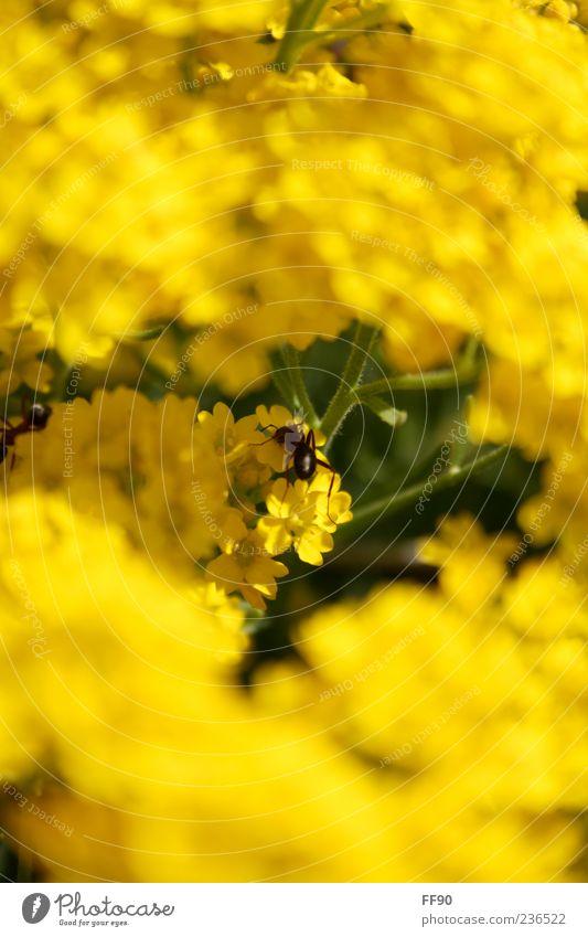 Ich wär so gerne eine Biene... Natur Pflanze Tier Sonnenlicht Blume Blüte Wildtier 1 gelb grün Farbfoto Außenaufnahme Nahaufnahme Menschenleer Tag Kontrast