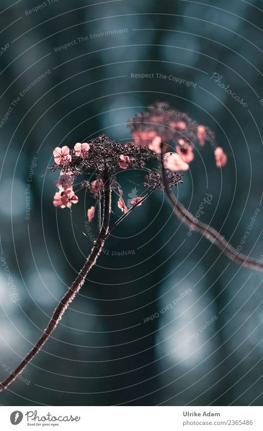 Verblühte Hortensien Design Trauerkarte Trauerfeier Beerdigung Natur Pflanze Herbst Winter Blume Blüte Hortensienblüte verblüht Garten Park glänzend leuchten