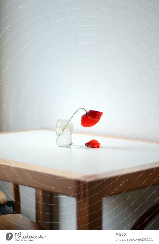Fall Dekoration & Verzierung Tisch Blume Blüte Blühend Duft verblüht rot Ende Trauer Traurigkeit Vergänglichkeit Mohn Mohnblüte Vase Blumenvase Farbfoto
