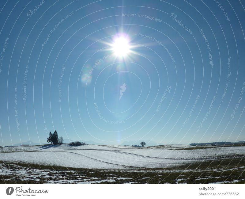 Wintersonne Ausflug Schnee Natur Landschaft Erde Himmel Wolkenloser Himmel Sonne Sonnenlicht Schönes Wetter Eis Frost Baum Feld Hügel Erholung hell kalt blau