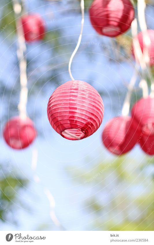 ein bisschen Licht für heute Himmel Natur Ferien & Urlaub & Reisen blau Baum ruhig Freude Feste & Feiern Lampe Garten rosa leuchten Dekoration & Verzierung