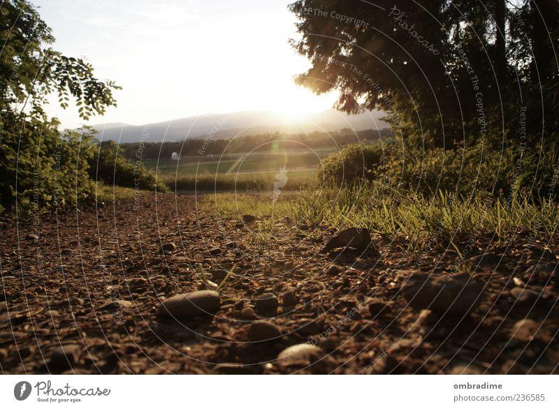 Dieser Weg wird steinig.... Umwelt Natur Landschaft Urelemente Erde Sommer Schönes Wetter Wiese Feld Wald Stimmung Sonnenuntergang Farbfoto Gedeckte Farben