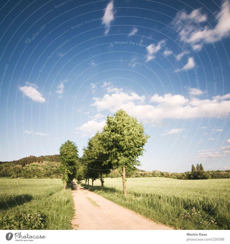 Ein Weg Umwelt Natur Landschaft Sand Himmel Wolken Schönes Wetter Wind Baum Feld Hügel ästhetisch Unendlichkeit Klischee blau grün Beginn Einsamkeit Erwartung