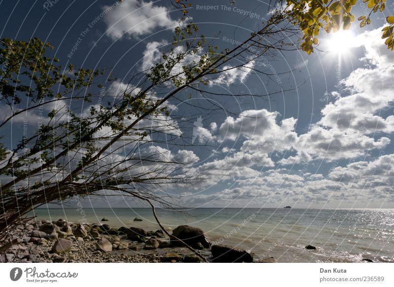 Sunshine Reaggae Himmel Natur Baum Pflanze Sommer Strand Wolken Wärme Küste Sand Horizont Zufriedenheit Klima Insel Fröhlichkeit Schönes Wetter