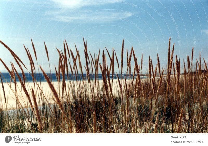 Strandgras Himmel Sonne Meer Strand Gras Atlantik