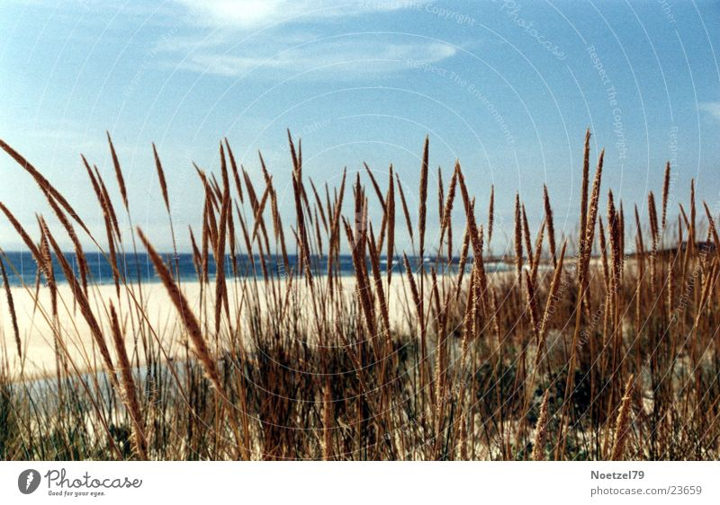 Strandgras Himmel Sonne Meer Gras Atlantik