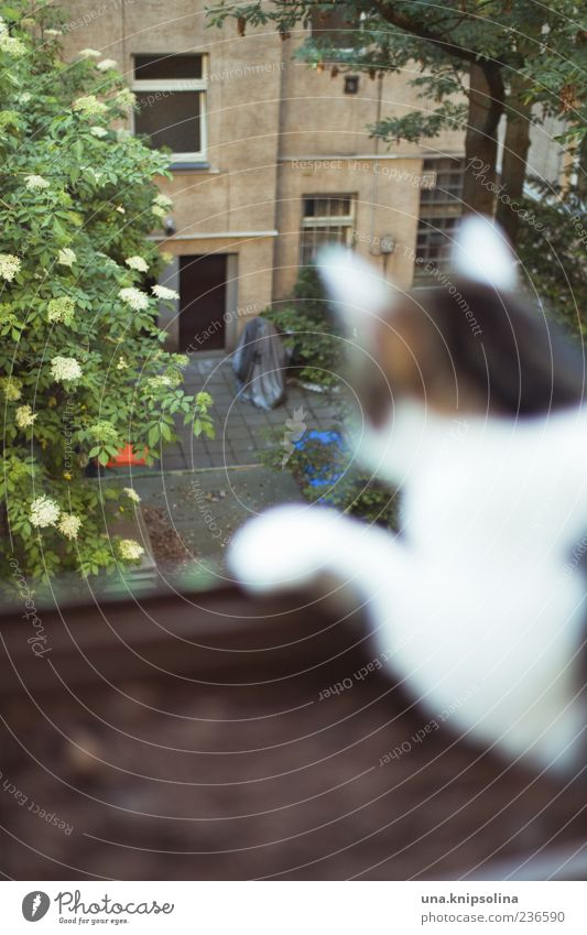 beobachten Baum Haus Bauwerk Gebäude Fassade Garten Innenhof Tier Haustier Katze 1 entdecken warten Hinterhof Balkon Aussicht Farbfoto Außenaufnahme