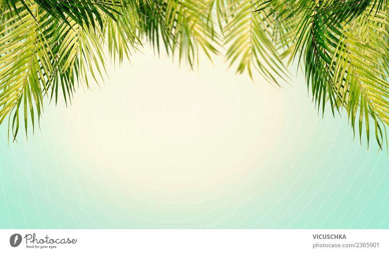 Tropische Palmenblätter mit Himmel Hintergrund Natur Ferien & Urlaub & Reisen Sommer Pflanze Landschaft Meer Erholung Blatt Strand Reisefotografie