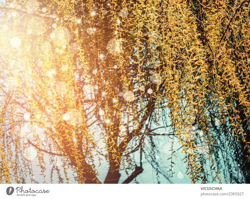 Frühlings Natur mit blühender Trauerweide Lifestyle Design Sommer Garten Landschaft Pflanze Schönes Wetter Baum Blatt Blüte Park gelb Sonnenuntergang