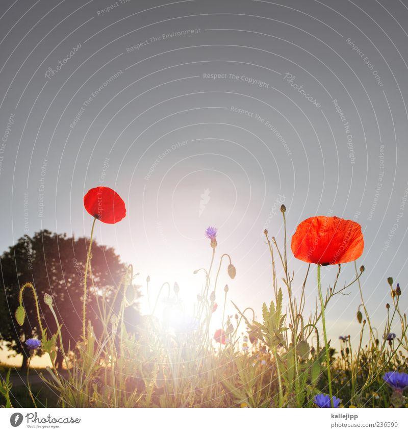 farbterroristen Lifestyle Umwelt Natur Landschaft Pflanze Luft Sonne Sonnenlicht Sommer Klima Wetter Schönes Wetter Baum Blume Gras Wildpflanze Wiese Feld