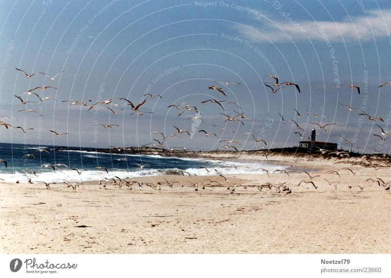 aufgeschreckte Möwen Sonne Meer Strand Sand Atlantik