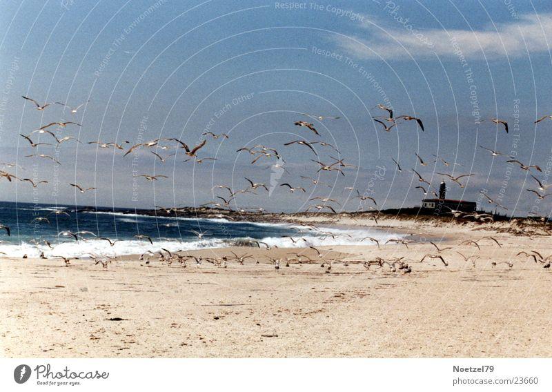 aufgeschreckte Möwen Strand Meer Atlantik Sonne Sand