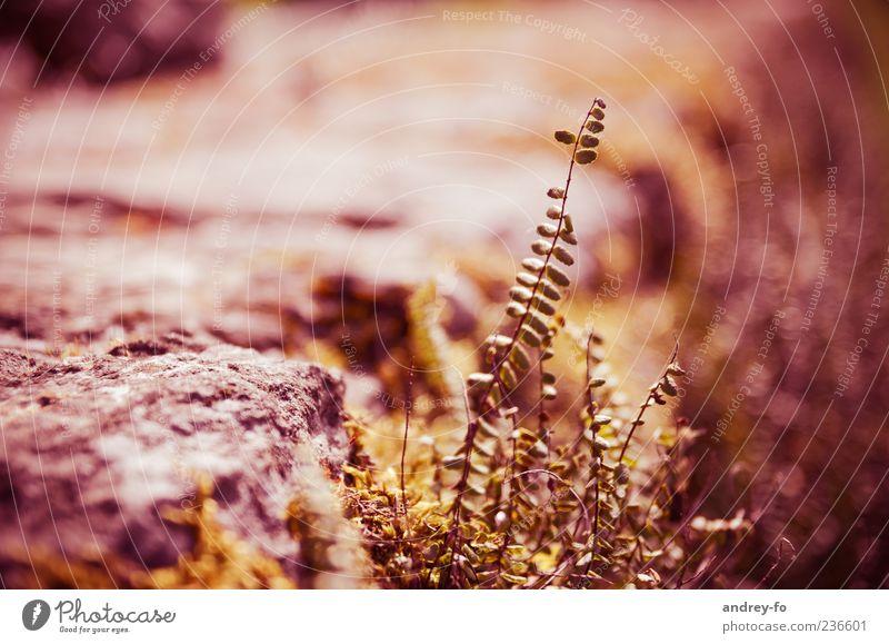 Pflanze Natur Pflanze rot Sommer Blatt Stein braun Wachstum heiß dünn Dürre dehydrieren