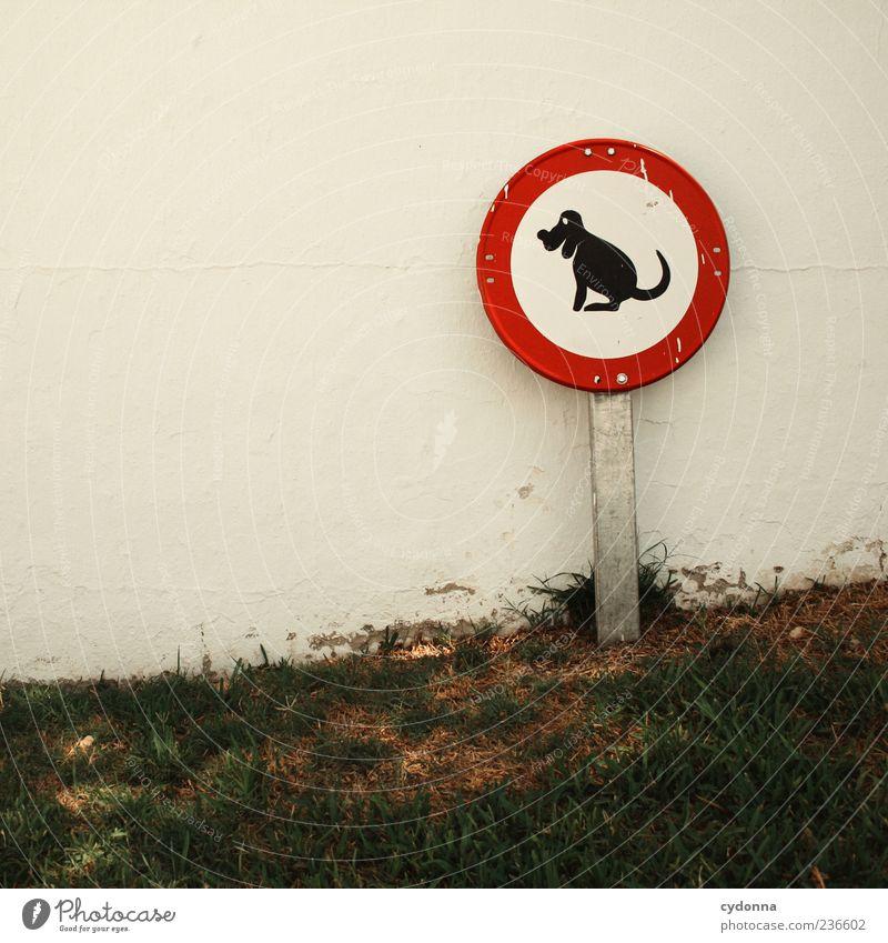 Bitte nicht auf den Rasen setzen Hund ruhig Umwelt Leben Wiese Wand Gras Mauer Park sitzen Schilder & Markierungen Hinweisschild Lifestyle einzigartig