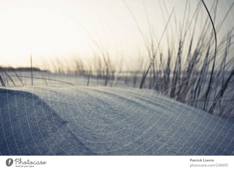 Spiekeroog | Sand fühlen Natur schön Ferien & Urlaub & Reisen Pflanze Meer Strand Einsamkeit ruhig Ferne Erholung Umwelt Freiheit Küste Wetter Wind