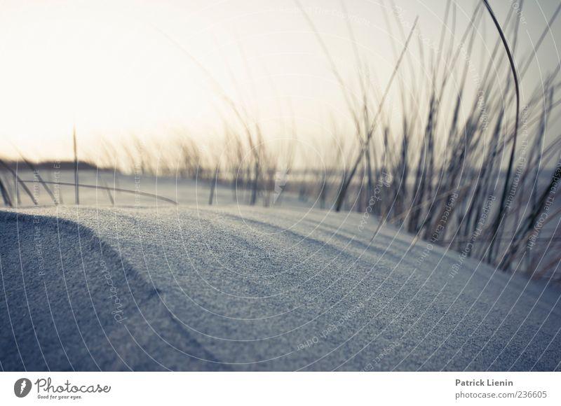 Spiekeroog | Sand fühlen schön ruhig Ferien & Urlaub & Reisen Ferne Strand Meer Wetter Wind Pflanze Küste Nordsee Insel liegen Einsamkeit ästhetisch Erholung