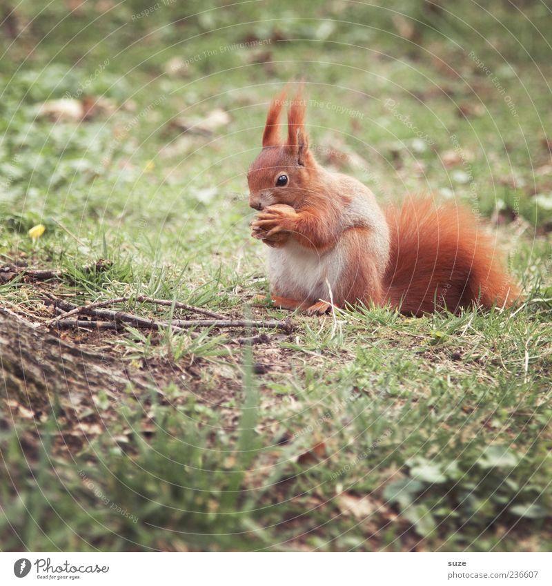 Alles meine! Natur schön grün Pflanze rot Landschaft Tier Umwelt Wiese Gras klein außergewöhnlich Park Wildtier niedlich Fell