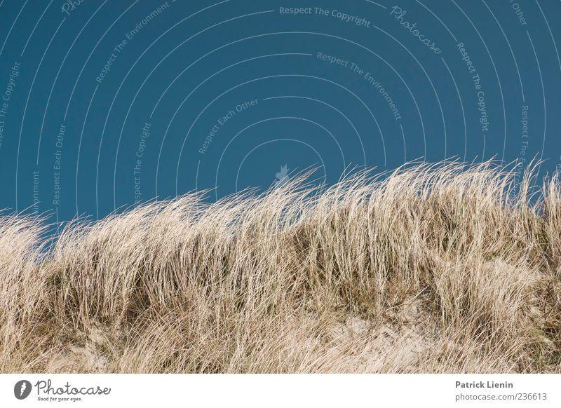 Spiekeroog | Dünenwind Natur schön Ferien & Urlaub & Reisen Pflanze Meer Strand Einsamkeit ruhig Ferne Erholung Umwelt Freiheit Küste Sand träumen Wetter
