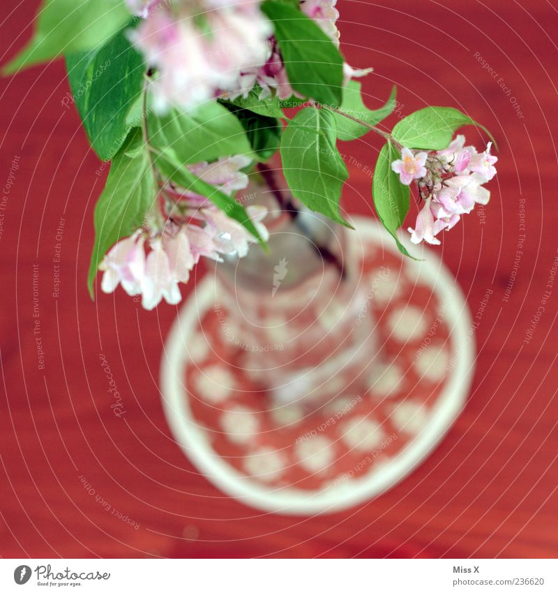 Oben rot Blume Blatt Frühling Blüte Glas rosa Dekoration & Verzierung Blühend Duft Vase Tischwäsche Zweige u. Äste Blumenvase Frühlingsblume Tischdekoration