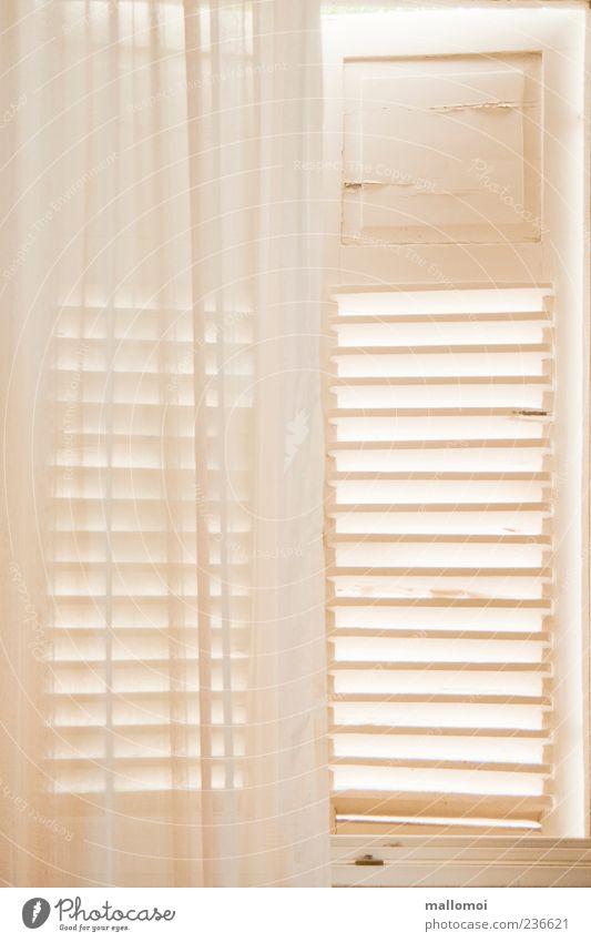 Gardine und Fensterladen Vorhang Lichteinfall Sichtschutz Häusliches Leben Wohnung Raum Schlafzimmer Fensterrahmen Lamelle hell Sicherheit Schutz Geborgenheit