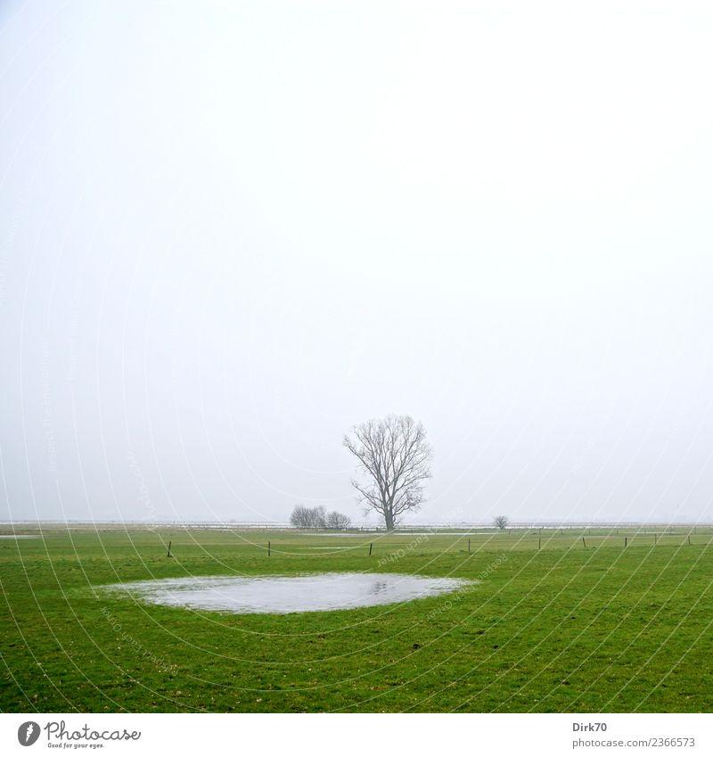 Norddeutschland, Weidelandschaft mit Tümpel Umwelt Natur Landschaft Himmel Wolken Winter Klima schlechtes Wetter Nebel Baum Gras Wiese Teich Pfütze Bremen hell