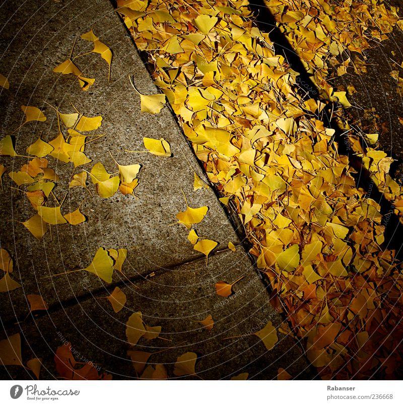 Herbstblätter Natur Baum Blatt kalt gelb Straße außergewöhnlich Park Wind Beton Boden Bürgersteig Altstadt Herbstlaub herbstlich