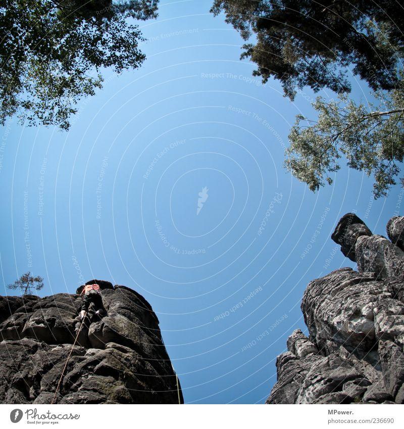 naufkraxeln Mensch Himmel blau Baum oben Freiheit Bewegung Stein Kraft Felsen hoch maskulin Seil Aktion Ast Klettern