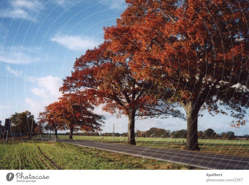 Straße im Herbst Allee Roteichen