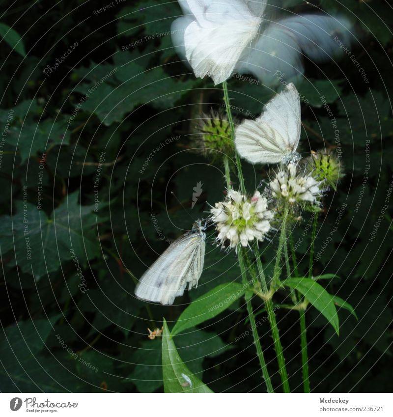 Fly away Natur weiß grün Pflanze Sommer Blume Tier schwarz gelb fliegen sitzen natürlich elegant frei Wachstum Tiergruppe