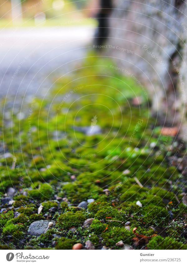 titel werden überbewertet,... Pflanze Moos grau grün schwarz steinig Wand Straße Fußweg Ecke Dorf dreckig Am Rand feucht Putz Stein bewachsen Farbfoto
