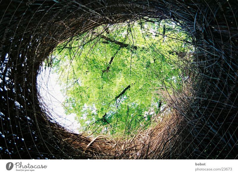 Weidekunst 003 Natur grün Blatt Holz braun Aussicht Ast Zweig Ausstellung Weidengeflecht