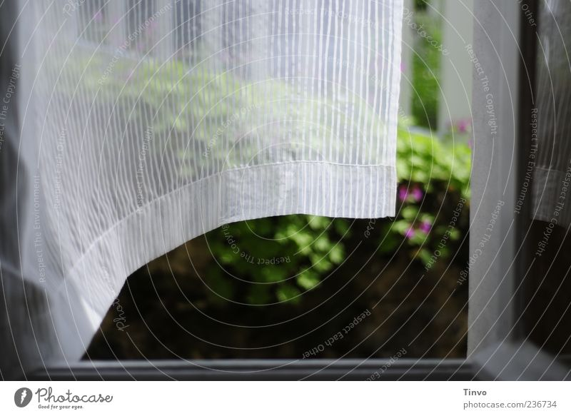 Gardine weht aus geöffnetem Fenster Häusliches Leben Wohnung Bewegung Sichtschutz offen Wind wehen Windzug Luft lüften leicht luftig Leichtigkeit frisch