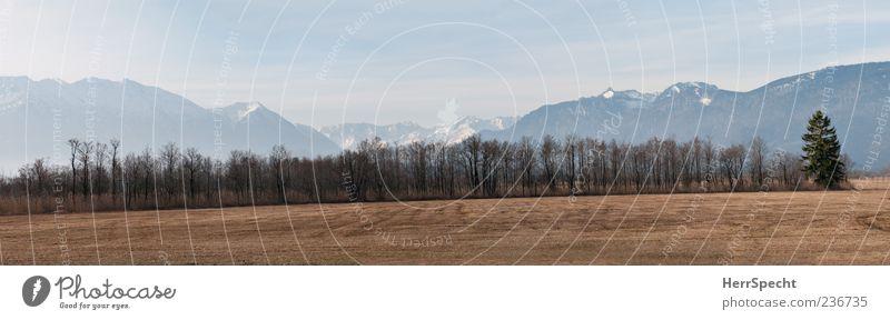 Moosblick Natur Baum blau grau Landschaft braun Alpen Schönes Wetter Panorama (Bildformat) Moor Sumpf Schneebedeckte Gipfel