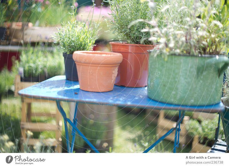 table top gardening Natur Pflanze Sommer Garten Stil natürlich Design Tisch Wachstum Lifestyle Kräuter & Gewürze Duft Markt Blumentopf einrichten Präsentation