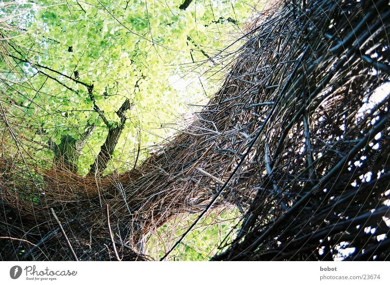 Weidekunst 002 Natur grün Blatt Holz braun Aussicht Ast Zweig Ausstellung Weidengeflecht