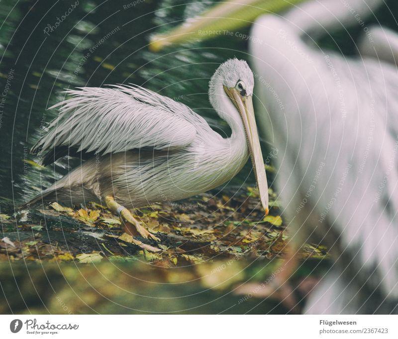 Komische Vögel Ferien & Urlaub & Reisen Tourismus Ausflug Abenteuer Umwelt Natur Landschaft Klima Klimawandel Tier Haustier Wildtier Vogel Flügel Zoo