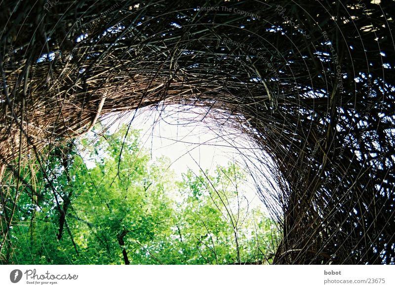 Weidekunst 001 Natur grün Blatt Holz braun Aussicht Ast Zweig Ausstellung Weidengeflecht