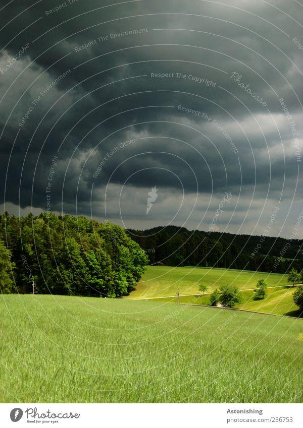 Wetterumbruch I Umwelt Natur Landschaft Pflanze Erde Himmel Wolken Gewitterwolken Horizont Sommer schlechtes Wetter Unwetter Baum Gras Wiese Feld Wald Hügel