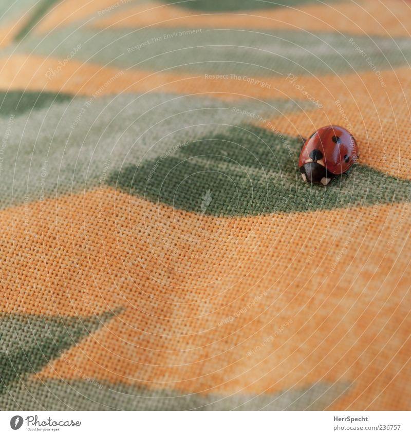 Is ja alles Fake! Käfer Marienkäfer 1 Tier Stoff Farbfoto Außenaufnahme Muster Strukturen & Formen Menschenleer Textfreiraum unten Textfreiraum Mitte