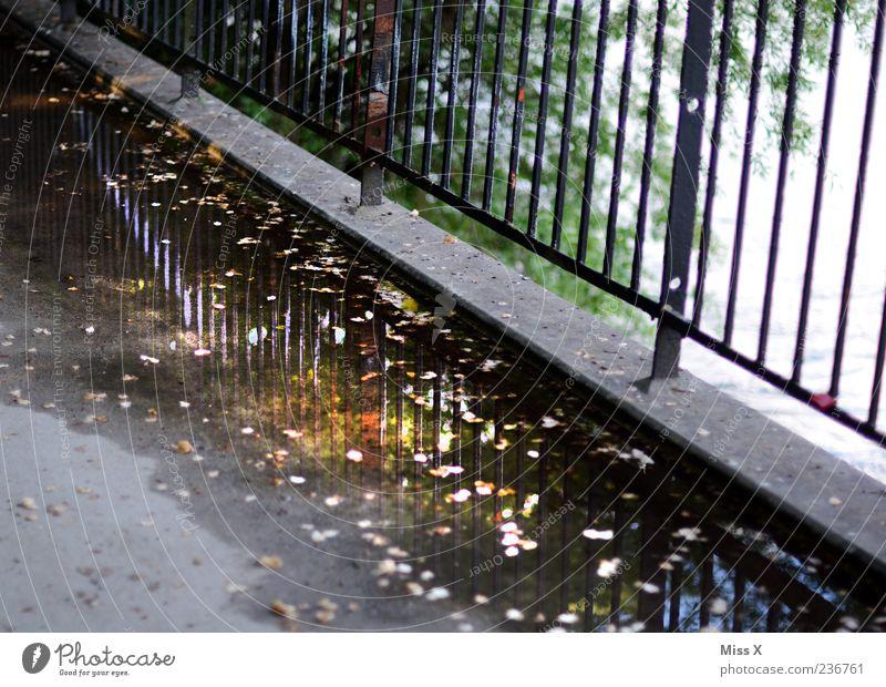 An der Donau entlang Wasser Brücke Wege & Pfade dreckig nass Reflexion & Spiegelung Zaun Pfütze Herbstlaub Blatt Bürgersteig Farbfoto Außenaufnahme Menschenleer