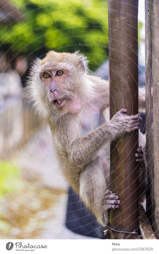 Affe in Songkhla makaken affen Affen Thailand Tempel Baby Babyaugen Tier Säugetier Natur Menschenaffen Äffchen niedlich Erholung Pause ausruhend schön zusammen